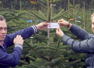 123Tannenbäume Weihnachten nachhaltig Umwelt Weihnachten