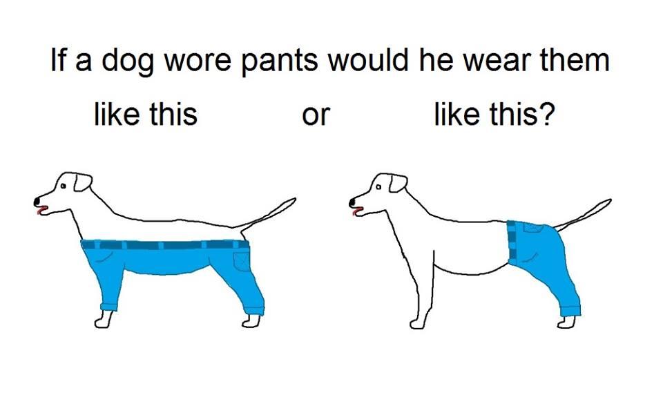 Hund_Hose_Problem
