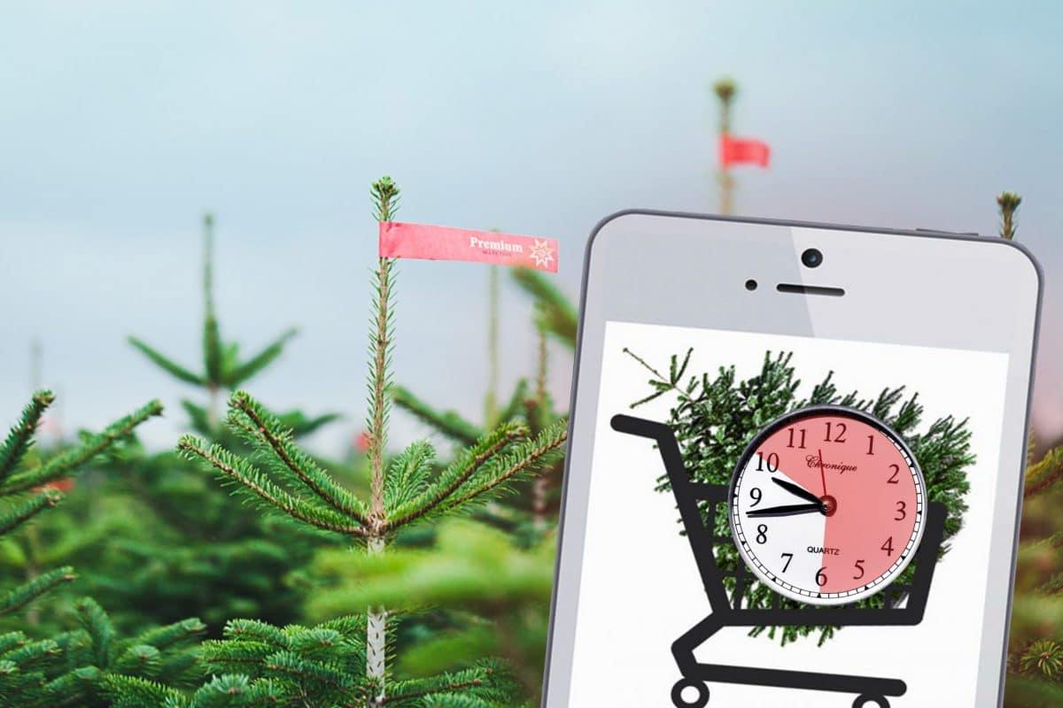 Meine Tanne: Same-Day-Delivery für Weihnachtsbäume