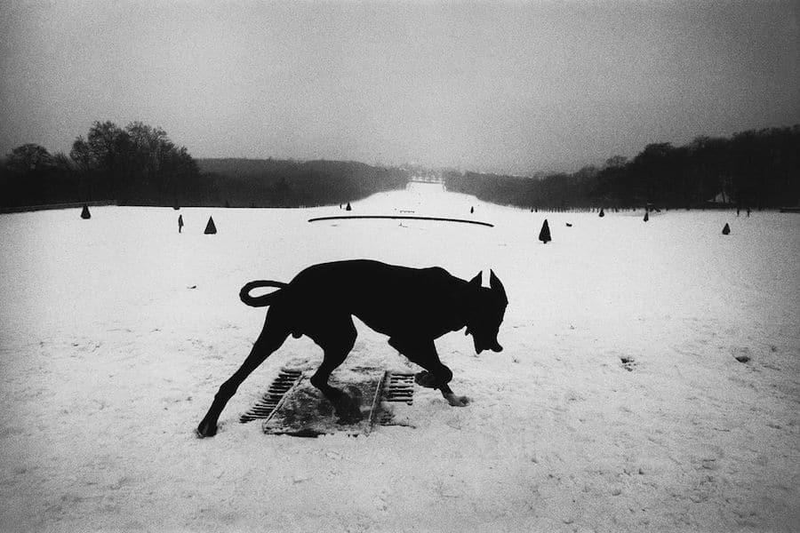 Hund in Schneelandschaft